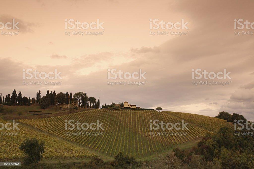 Italian Vineyard in Chianti Fall stock photo