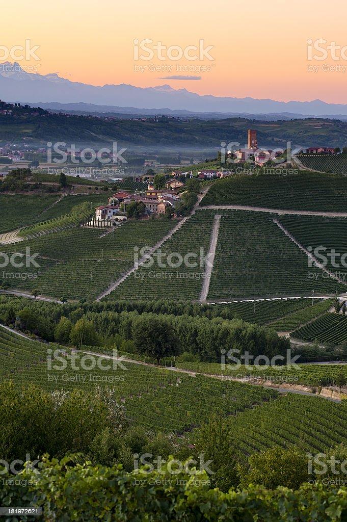 Italian vineyards at dusk stock photo
