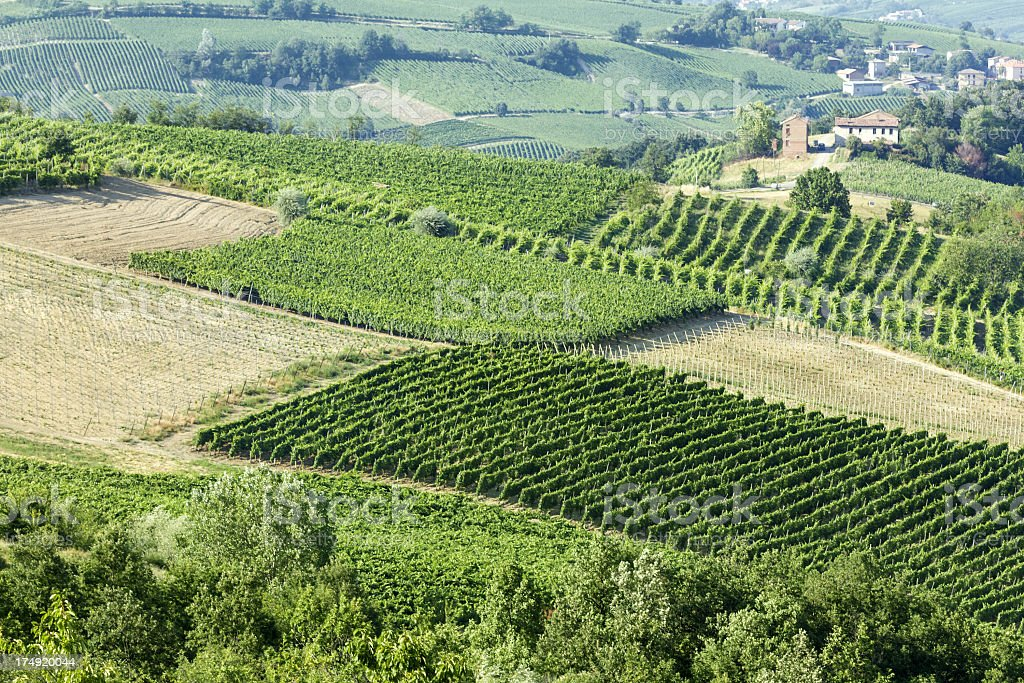 Italian vineyards royalty-free stock photo