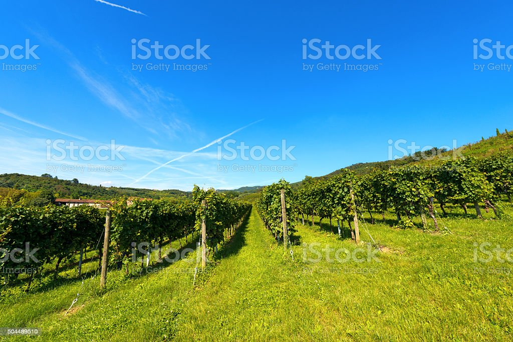 Italian Vineyards - Valpolicella Wine stock photo