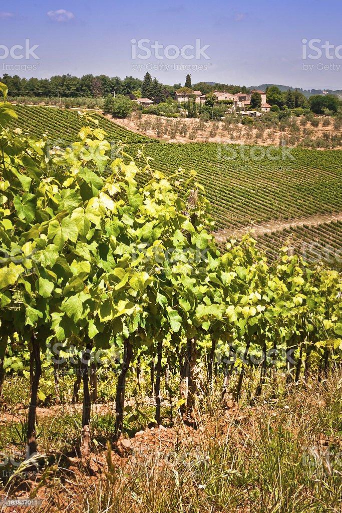 Italian Vineyards with Tuscan Lansdscape, Chianti Region stock photo