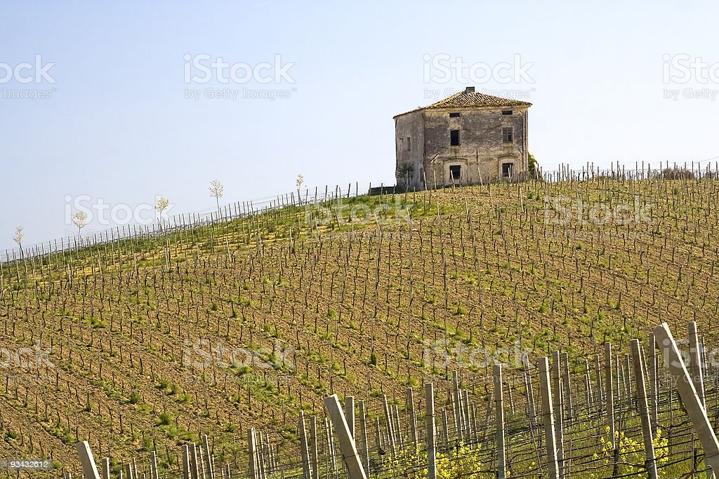 Italian wineyard with old farmhouse stock photo