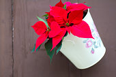 Italy, Christmas Decor: Red Poinsettia Hanging on Brown Door