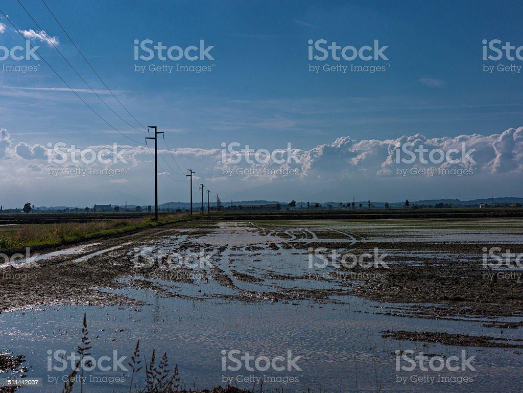 Italy. Piedmont. Among the rice paddies stock photo