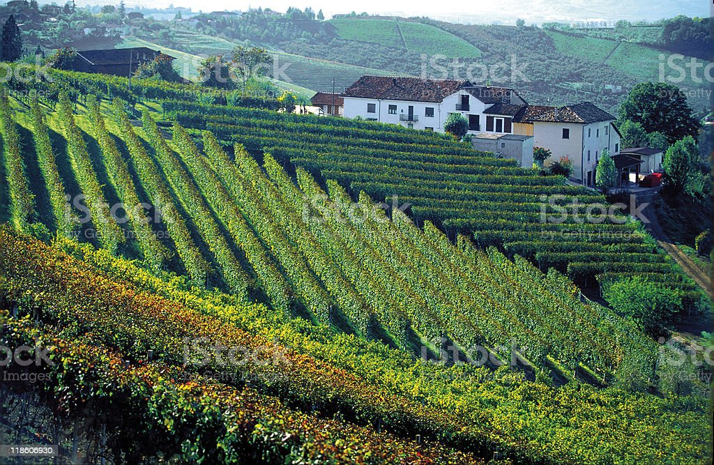 Italia Piemonte Langhe I Vigneti e le cascine royalty-free stock photo