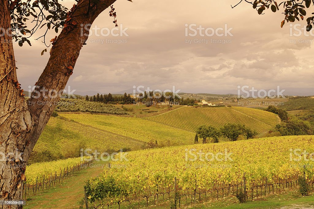 Italy Tuscany and Vineyards Fall royalty-free stock photo