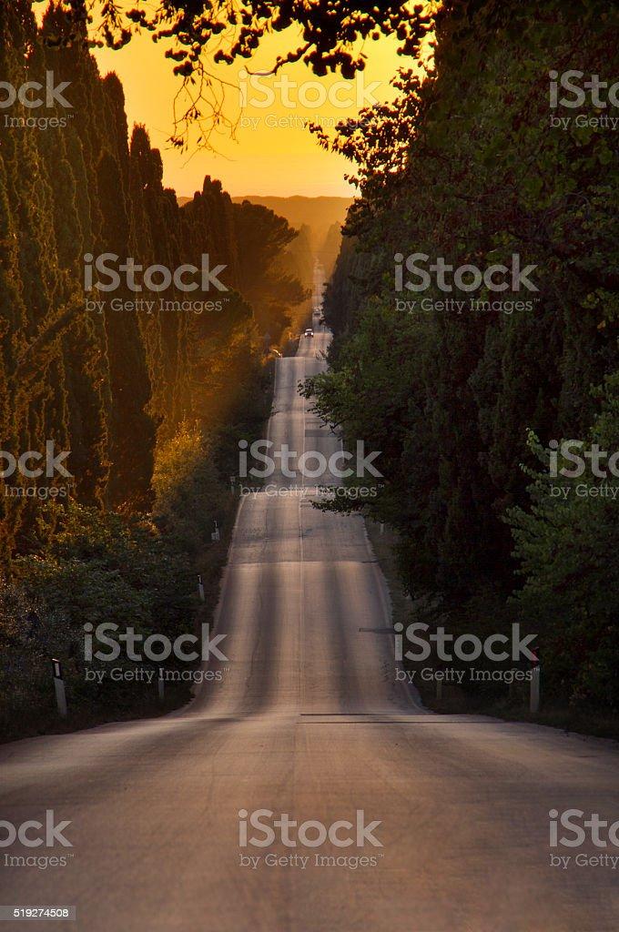 Italy, Tuscany, Castagneto Carducci, Bolgheri, Road and cypresse stock photo