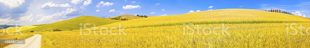 italy tuscany hill summer landscape panorama with yellow wheat f royalty-free stock photo