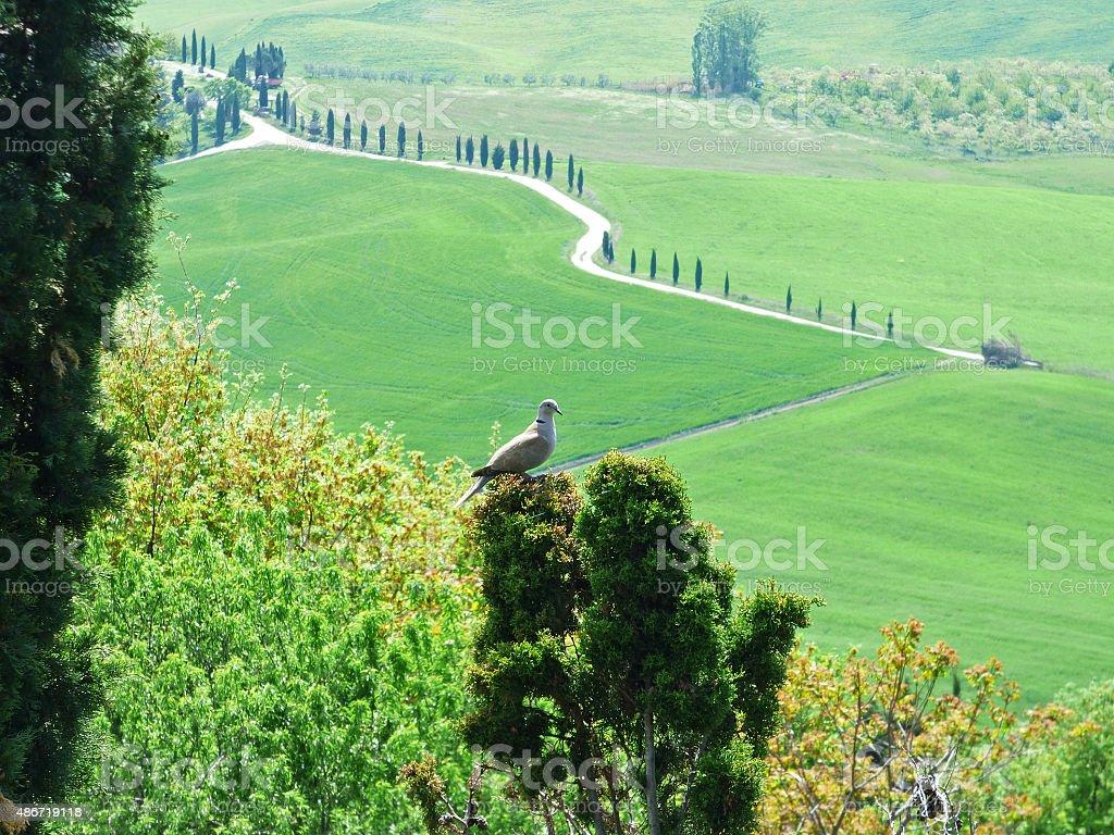 Italy, Tuscany, the Tuscan countryside stock photo