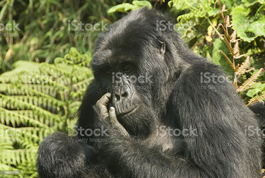 Itchy face stock photo