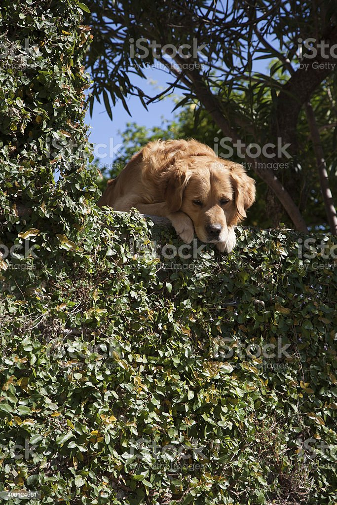 It's a dog gone day stock photo