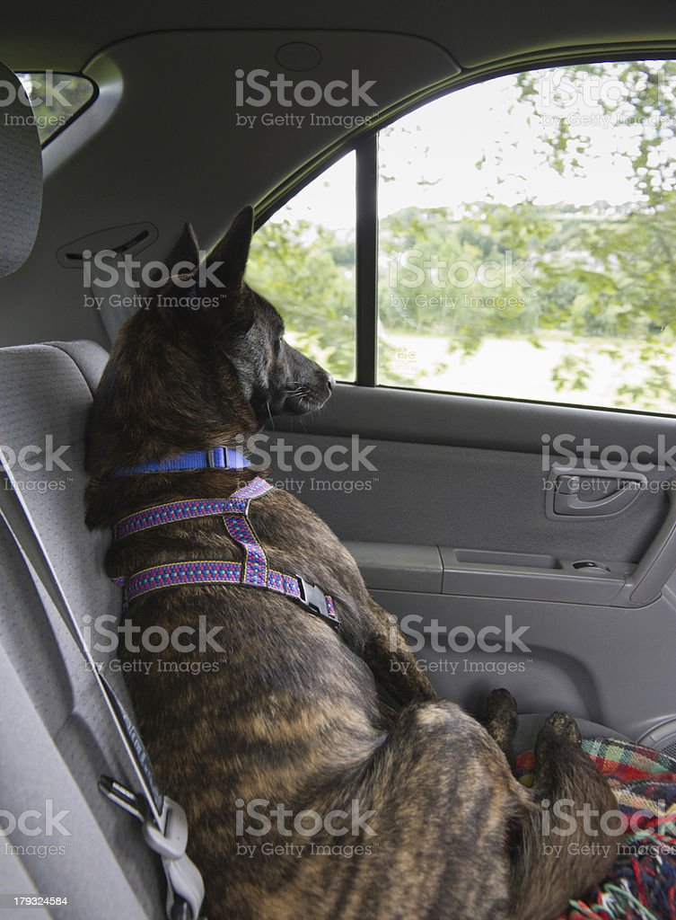 It's a dogs life. stock photo