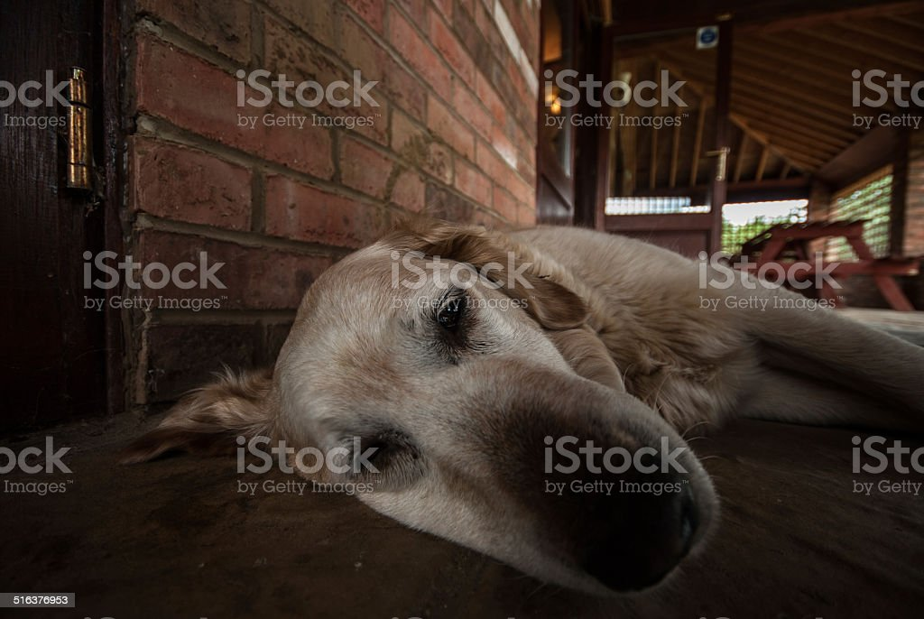 It's a Dog's Life stock photo