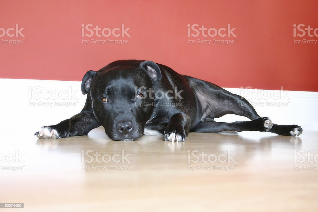 Its a Dog's Life! stock photo