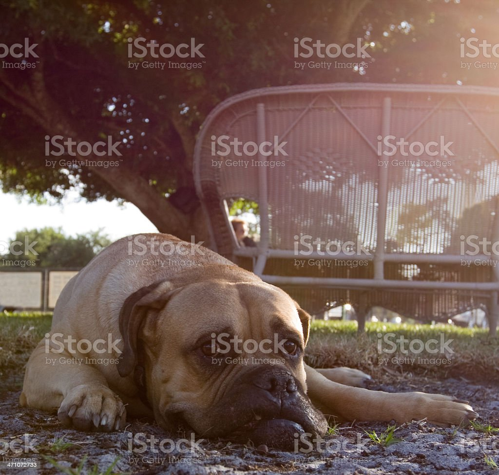 It's Been a Long, Hard Day. stock photo
