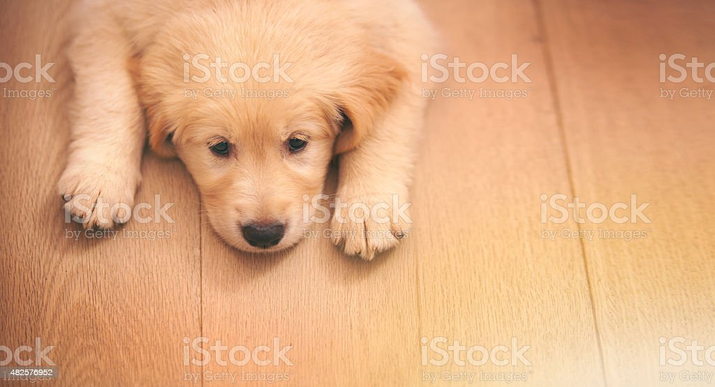 It's been a ruff day stock photo