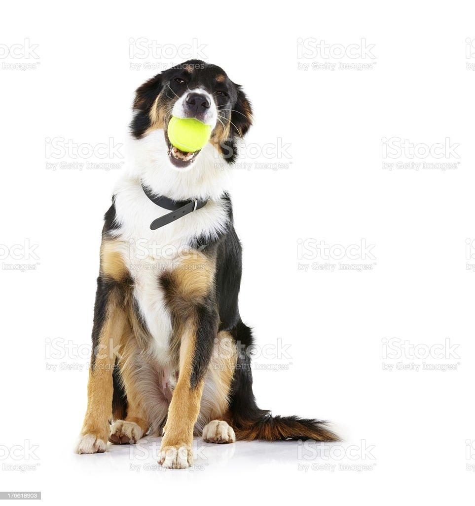 It's my ball! stock photo