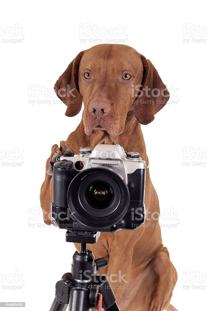 It's my turn to take pictures royalty-free stock photo