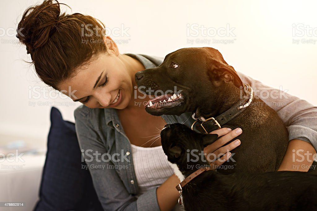 It's not a home without fur-kids stock photo