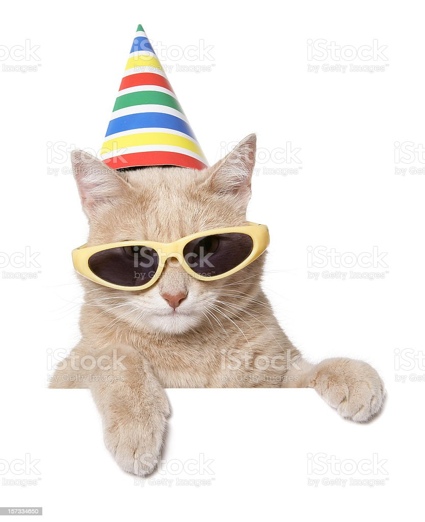 It's Party Time !!! royalty-free stock photo
