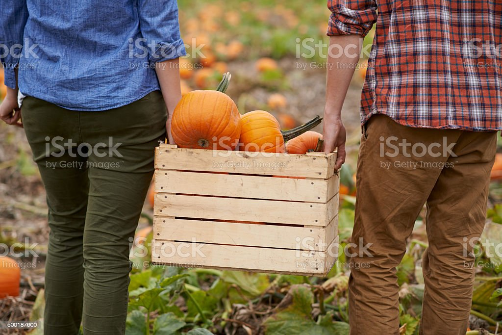 It's pumpkin picking season stock photo