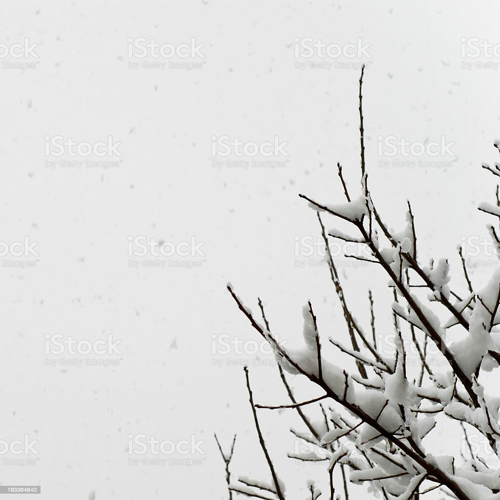 It's Snowing On A Tree In Winter royalty-free stock photo