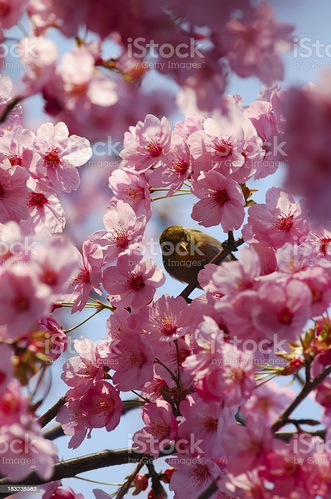 It's Spring! royalty-free stock photo