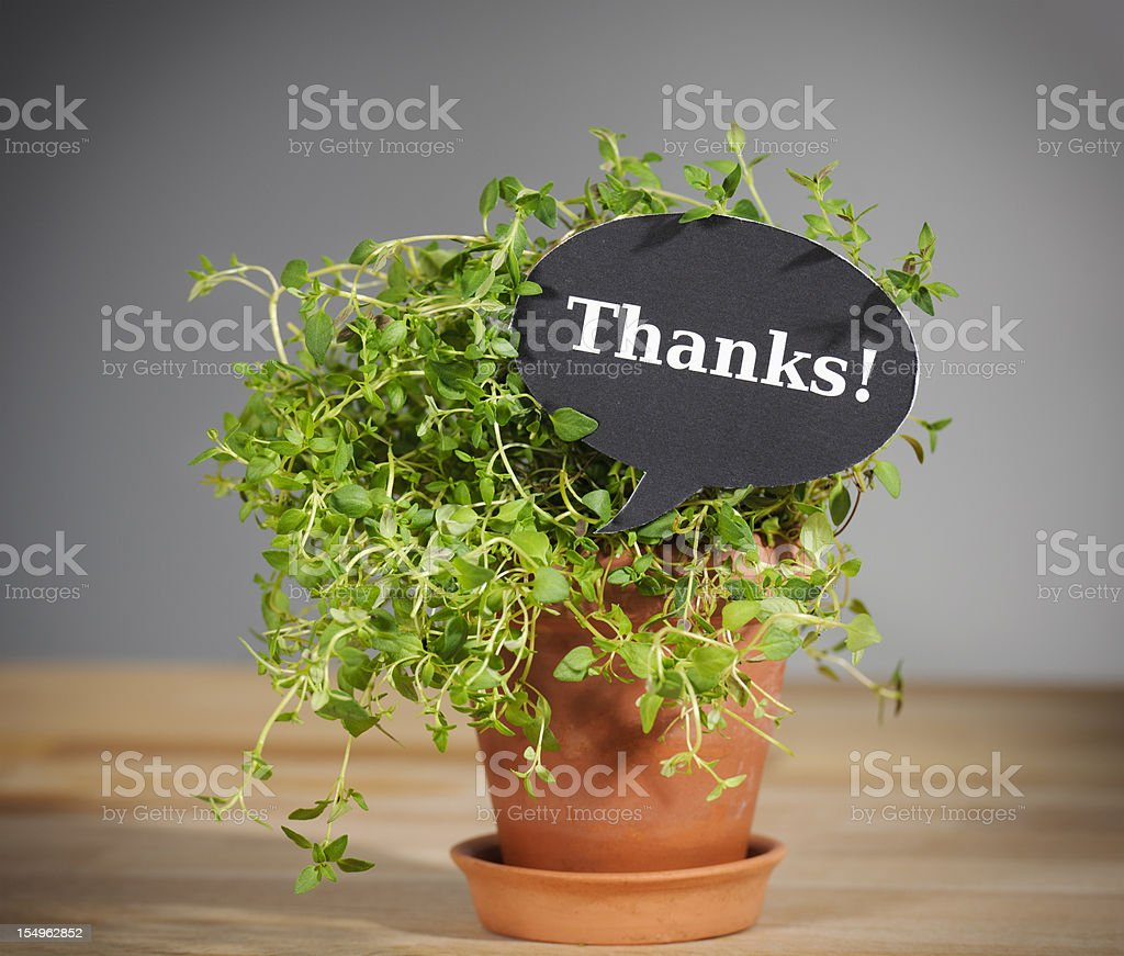It's Thyme To Say Thanks stock photo