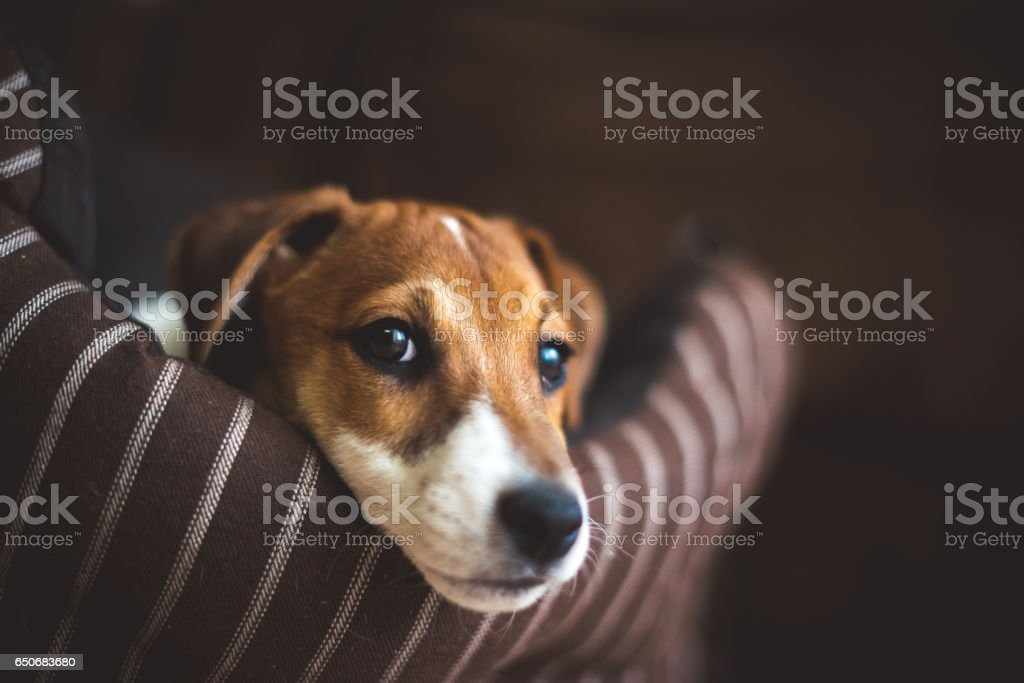 It's time for sleeping stock photo