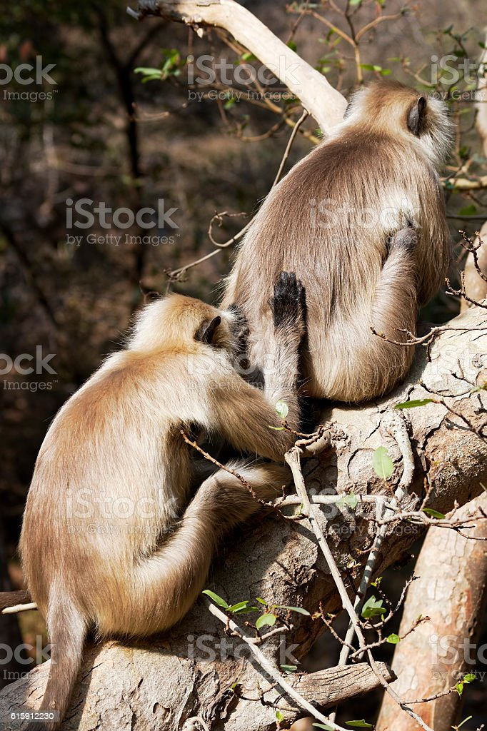 It's what friends do. stock photo