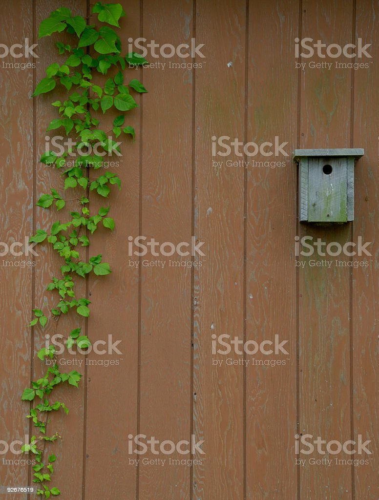 Ivy and Birdhouse royalty-free stock photo