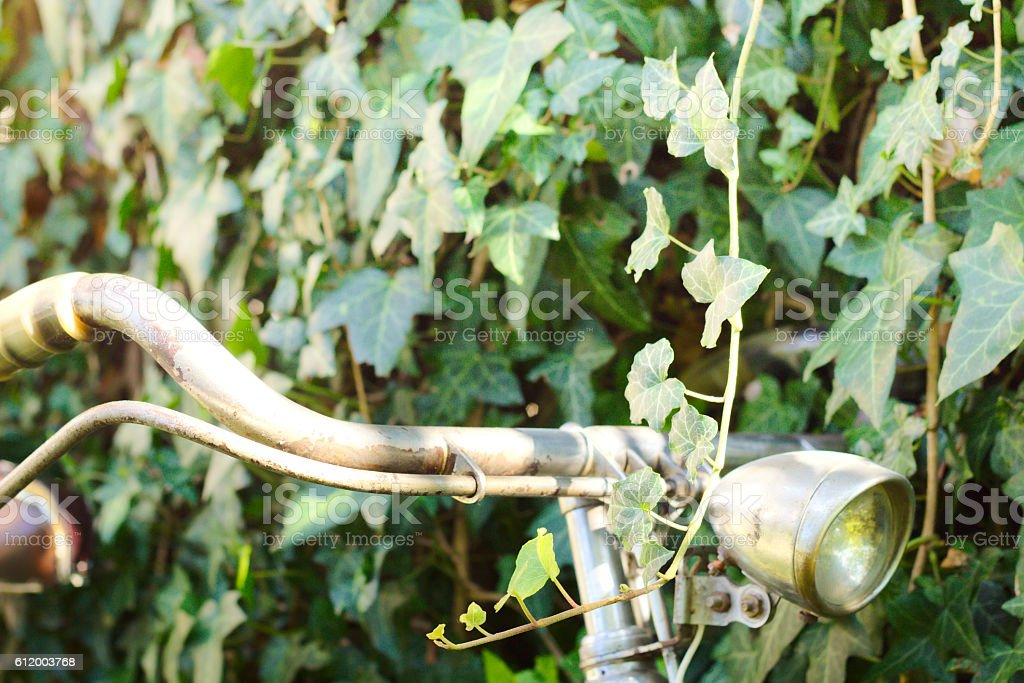 Ivy and retro styled bicycle stock photo