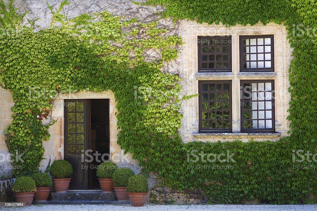 Ivy clad wall stock photo