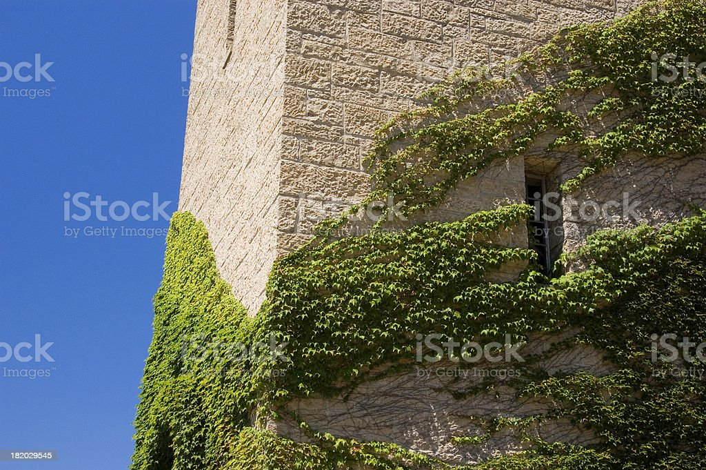Ivy clings to a stone tower. royalty-free stock photo