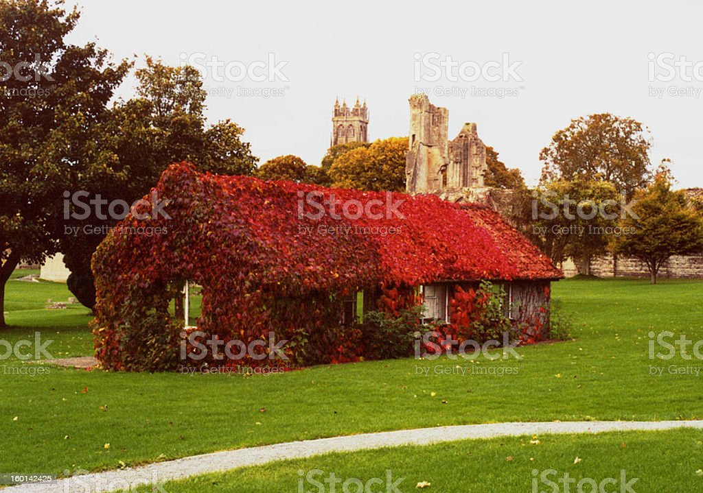 Ivy Covered Cottage royalty-free stock photo