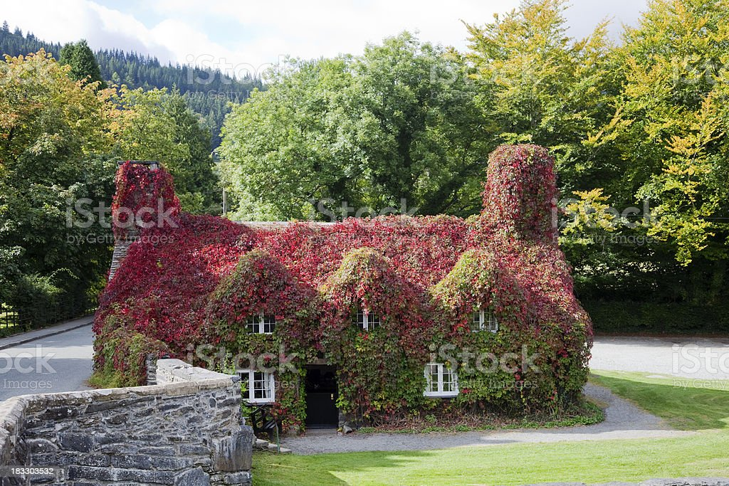 Ivy covered cottage stock photo