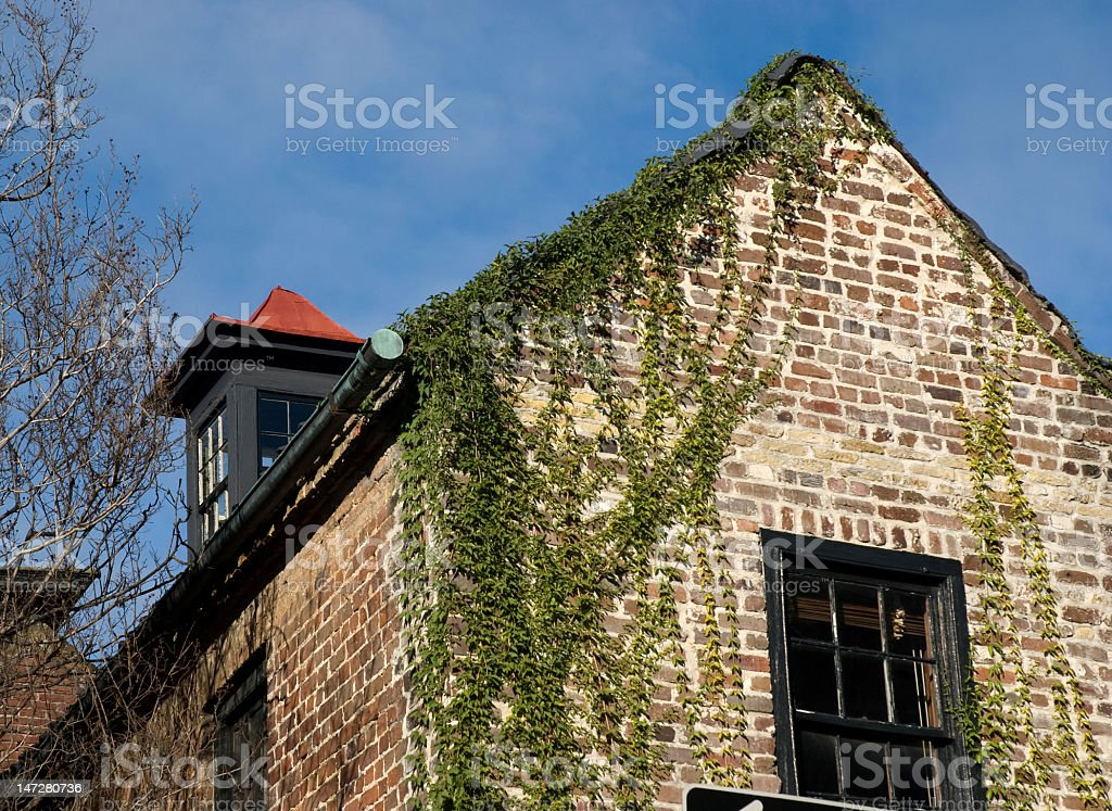 Ivy Covered Eaves royalty-free stock photo