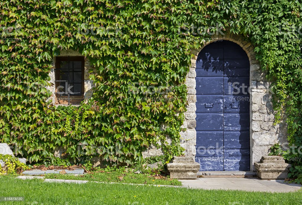 Ivy Covered Exterior Wall of a Historic Building stock photo