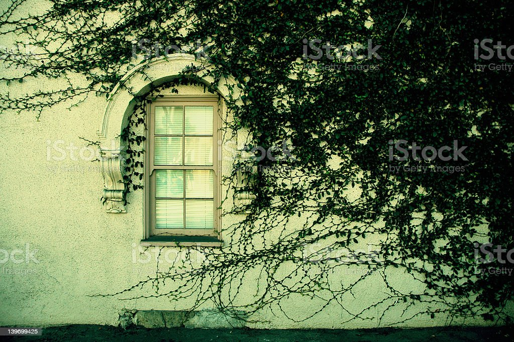 Ivy Covered Wall royalty-free stock photo