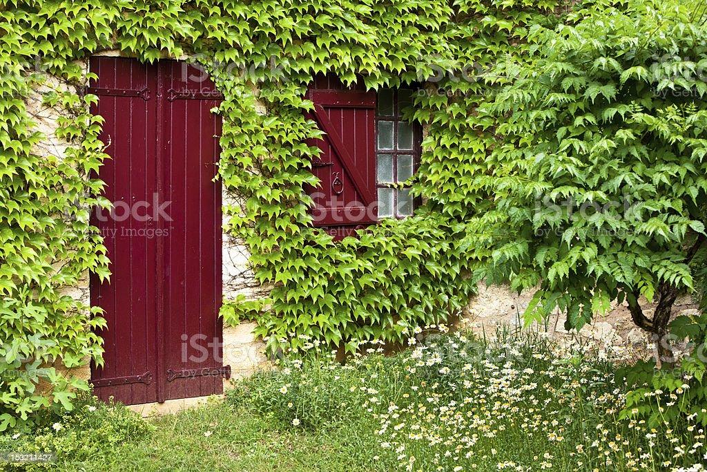 Ivy covered window and door stock photo