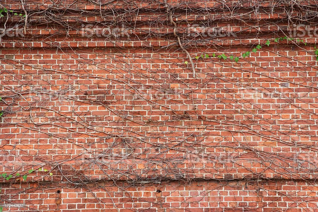 Ivy growing on brick wall with lots of copy-space royalty-free stock photo