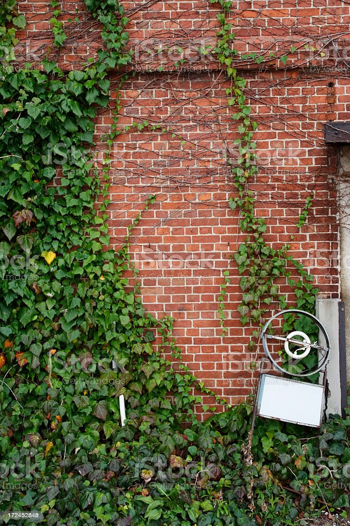 Ivy growing up a brick wall with lots of copy-space royalty-free stock photo