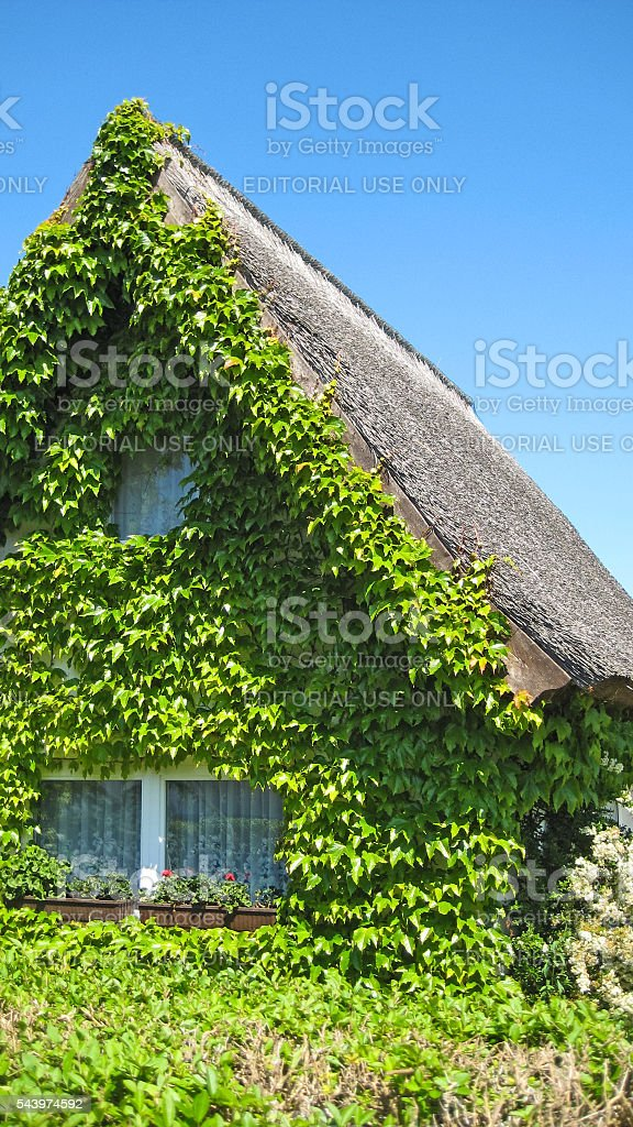 Ivy house stock photo