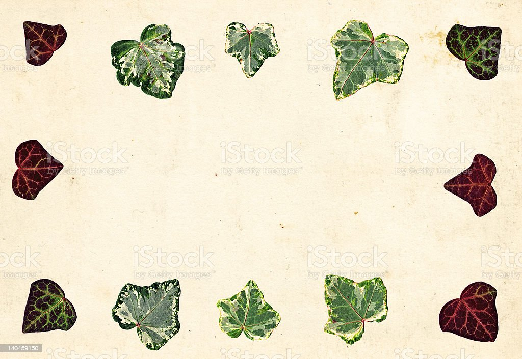 Ivy leaf border on paper royalty-free stock photo