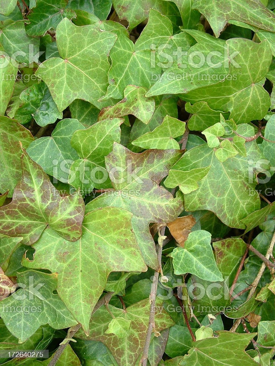 Ivy League Background royalty-free stock photo