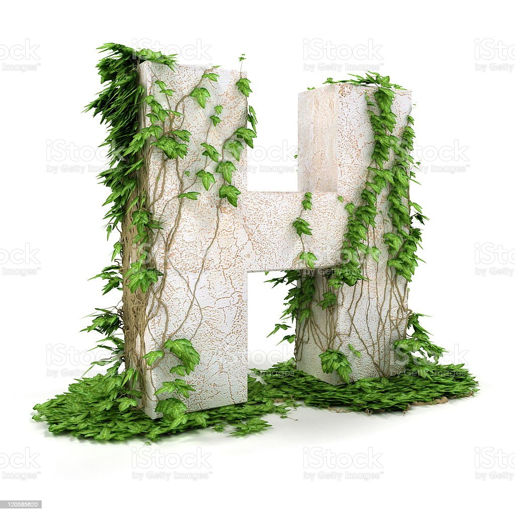 Ivy letter H isolated on white background. royalty-free stock photo