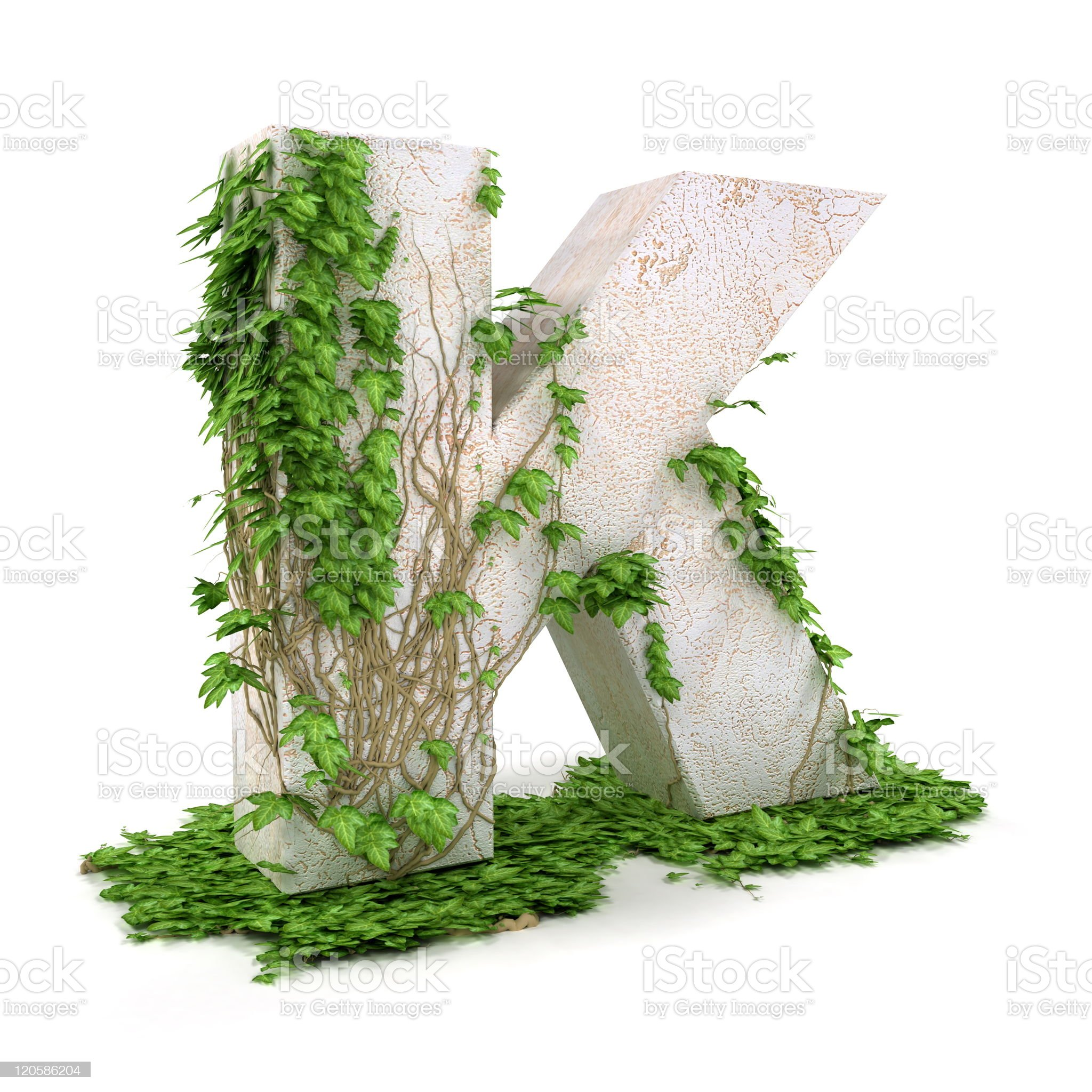 Ivy letter K isolated on white background. royalty-free stock photo