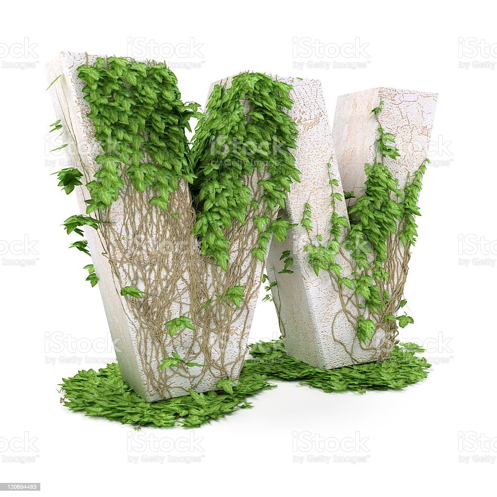 Ivy letter W isolated on white background. stock photo