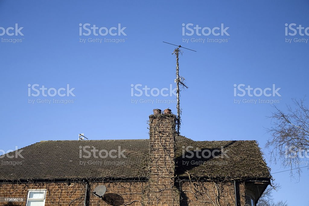 Ivy on Suburban House with Clear Blue Sky-Click for more royalty-free stock photo