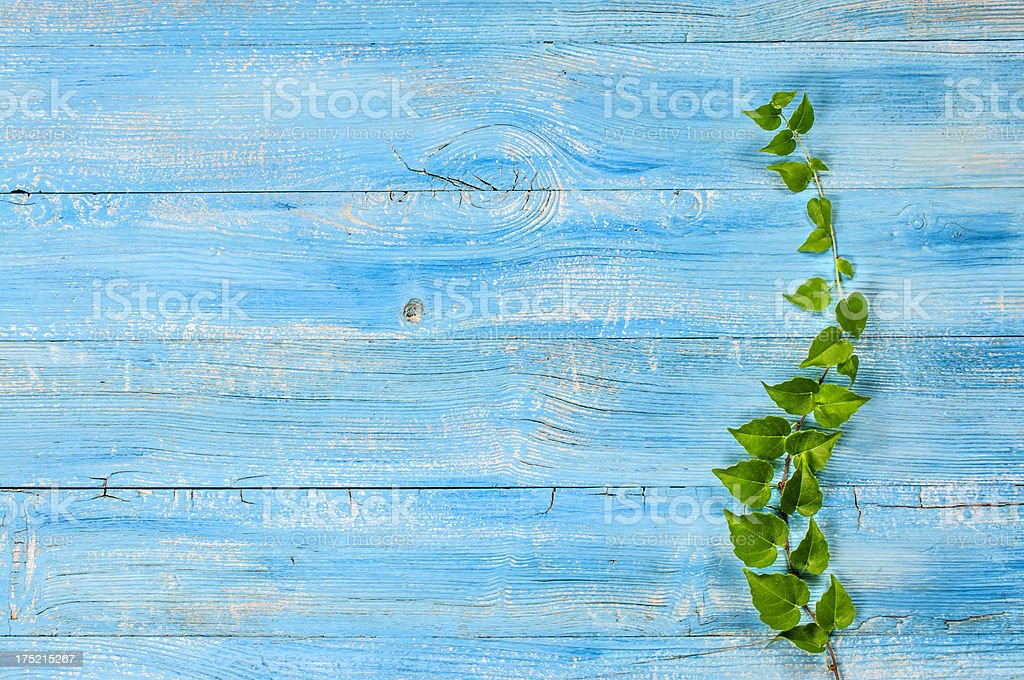 Ivy on weathered wood royalty-free stock photo